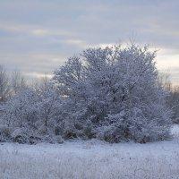 Декабрьский пейзаж :: Маргарита Батырева
