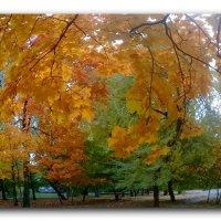Осенние мотивы. :: Зоя Чария