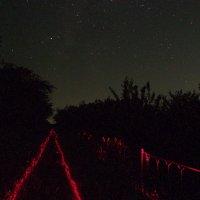 Про звёзды, ночь, дорогу и забор... :: Александр Резуненко
