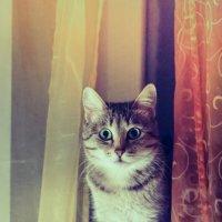 Ещё один котик.. :: Сергей Фатеев