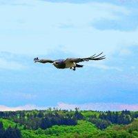 Год летящего Орла. :: Jakob Gardok