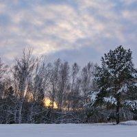 Закат в лесу, он как пожар. :: Михаил Полыгалов