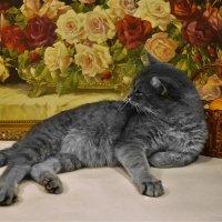 Кошачий натюрморт :: Клара
