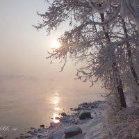 Второй день Нового 2019 года :: galina tihonova