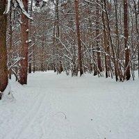 Зима в лесу! :: ирина