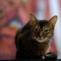 в Республике Кошек... #2 :: Андрей Вестмит