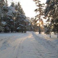 Утро в лесу :: Антон Завьялов