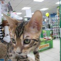 Котёнок. :: Зинаида