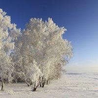 Морозный январь 4 :: Сергей Жуков