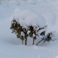 Снежный кустик.....Первый снег в Новом Году... :: Любовь К.