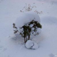 Снежный кустик......:)) Первый снег в Новом Году... :))) :: Любовь К.