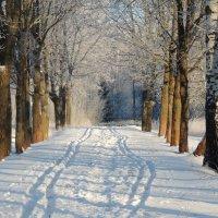 Лыжня, проложенная после новогоднего корпоратива... :: Вячеслав Маслов