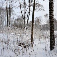 Зимняя сказка :: Яша Баранов