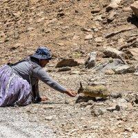 Боливийка кормит дикого зайца :: Георгий А