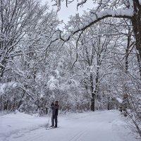 Лыжня :: Инна Драбкина