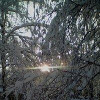 мороз и солнце :: Таня Новикова