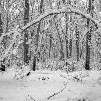 Зимние экспромты :: Сергей Тарабара