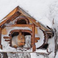 Хорошо, когда есть дом... :: Valeri Verovets