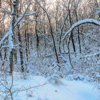 Под снежным покровом :: Юрий Стародубцев