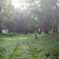 Таинственный  лес :: Геннадий Супрун
