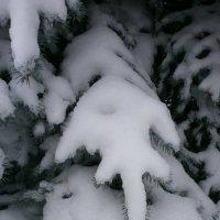 Перст Зимы .... :: Алёна Савина