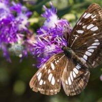 Бабочка на цветке. :: Юрий Харченко