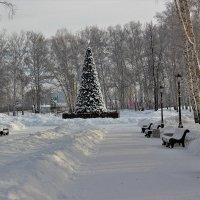 В зимнем парке. :: Венера Чуйкова