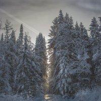 """""""Зима."""" :: victor buzykin"""