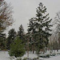 Зима в Ботаническом саду :: Александр Рыжов