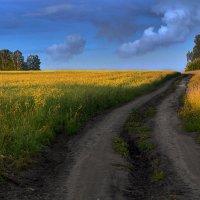 Русское поле :: Сергей Коновалов