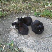 Три кота :: Игорь Гагилев