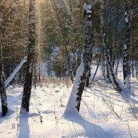 Русский лес зимой. :: Андрей