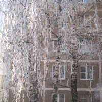 Березка зимой :: Елена Семигина