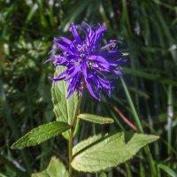 цветок   DSCF6101-63 :: Олег Петрушин