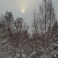 Красоты зимнего леса. :: Aleksandr Ivanov67 Иванов