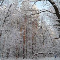 В лес сказочный идём мы на прогулку.. :: Андрей Заломленков
