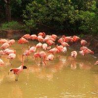 Фламинго :: Александр