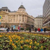 Будапешт  в декабре . :: Светлана Мельник
