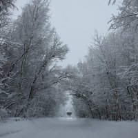 зимняя дорога :: Леонид Чащин