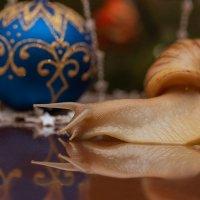Праздничная улитка по имени Плутон :: Елена Ахромеева