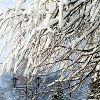 Ах эта зимушка зима!!!! :: Валентина Папилова
