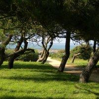 Деревья атлантического океана :: Sabina