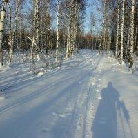 лыжи_и_солнце :: Алексей Немчинов
