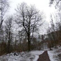 дорога в лесу :: Heinz Thorns