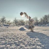 Рождественский морозец :: Женя Лузгин