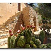Кактусы в монастыре Восакос. :: Зоя Чария