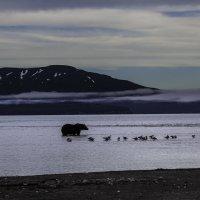 Вечерняя рыбалка на Курильском озере :: Геннадий Мельников