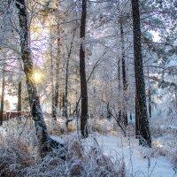 Зимний пейзаж :: Вадим Басов
