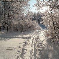В такой чудесный день бежать на лыжах нам не лень! :: Андрей Заломленков