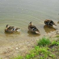 Совместная чистка перьев :: Daria Vorons